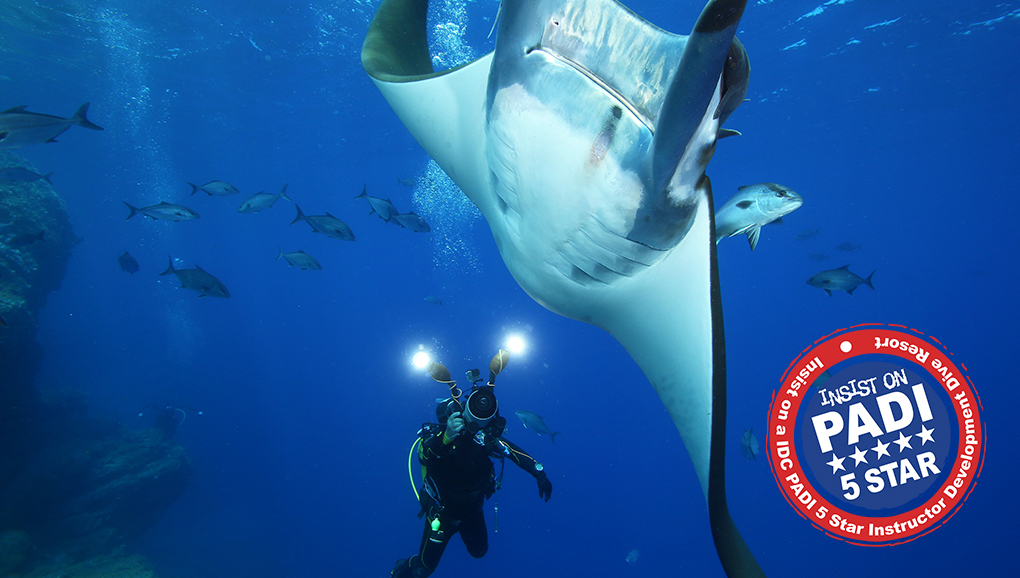 SPECIAL DIVING <br>WITH MANTA RAYS