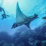 OFFSHORE DIVING TRIPS